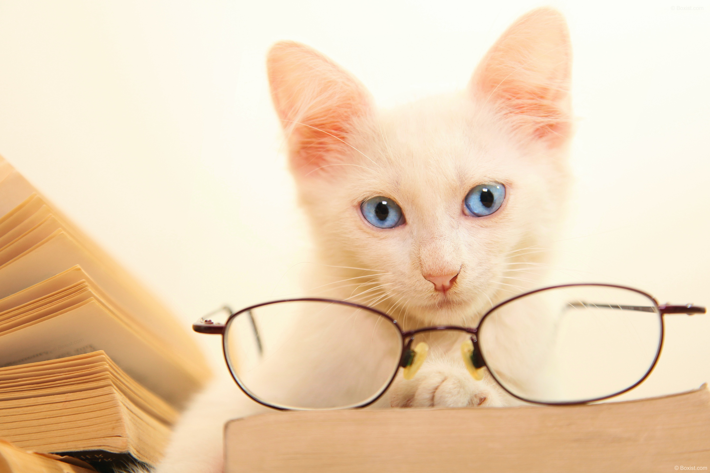 Beautiful Cat with Reading Glasses and Books